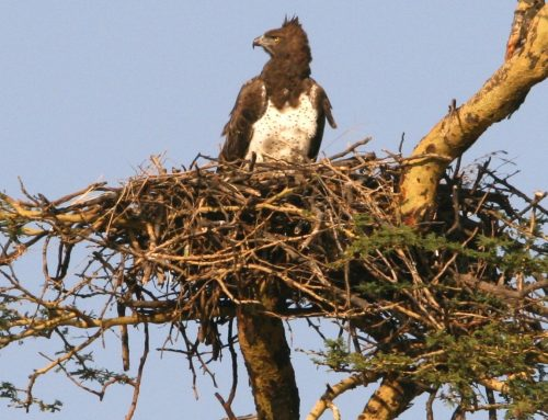 Emptying Nest