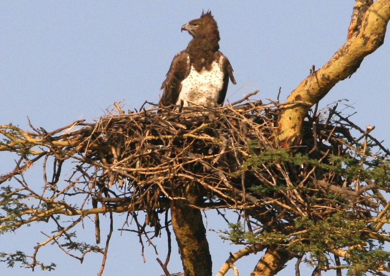 Emptying Nest